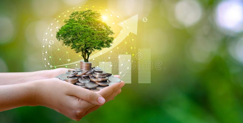 Hand Coin tree The tree grows on the pile. Saving money for the future. Investment Ideas and Business Growth. Green background stock photography