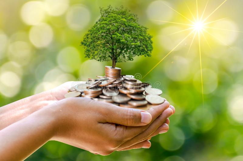 Hand Coin tree The tree grows on the pile. Saving money for the future. Investment Ideas and Business Growth. Green background wit stock image