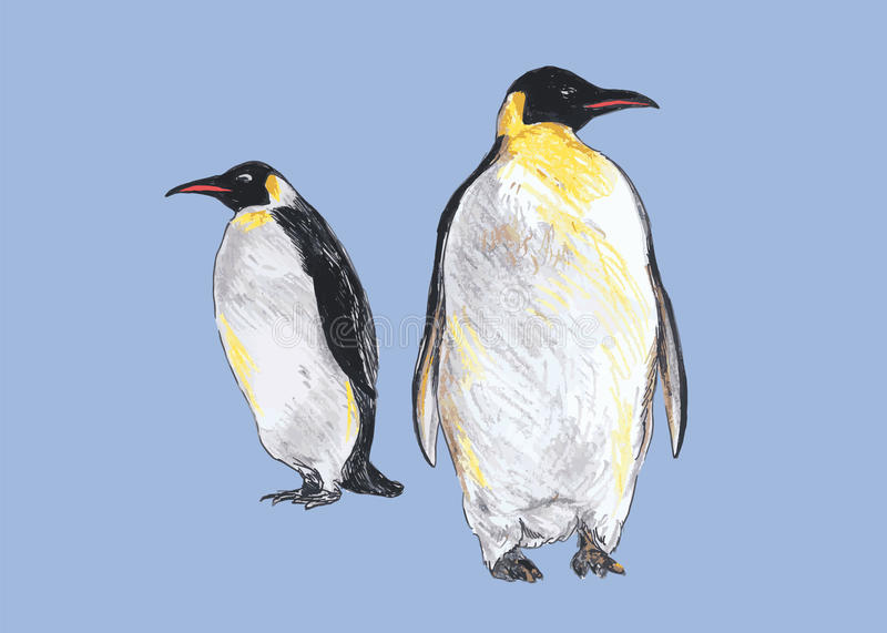 Hand colored drawing of penguins stock illustration