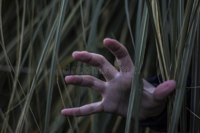 A hand in the bush. A hand coming out of the bush royalty free stock images