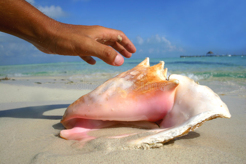 Hand and Conch stock photo
