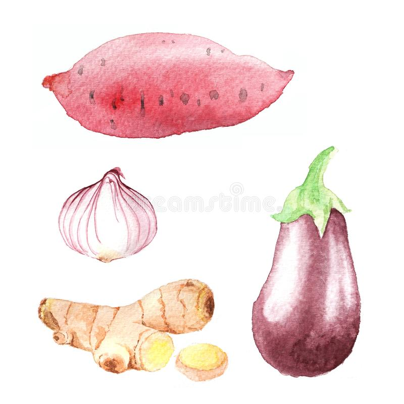 Free Hand Dawn Set With Watercolor Vegetables, Raw Food Stock Images - 103439694