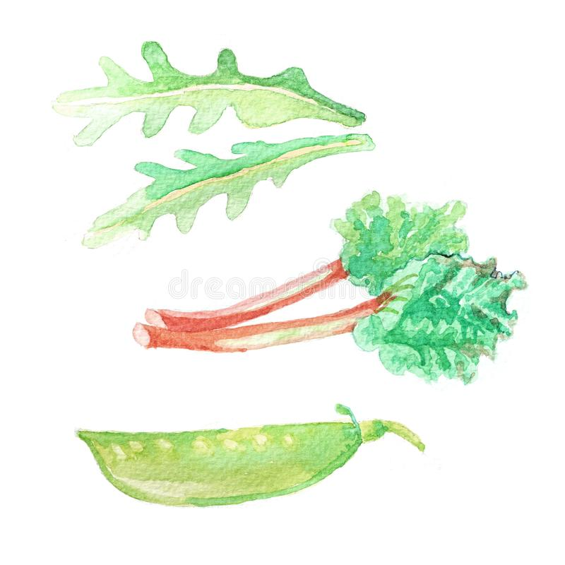 Free Hand Dawn Set With Watercolor Vegetables, Raw Food Royalty Free Stock Photography - 103439767