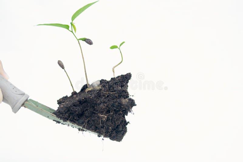 In hand de boom isoleert op witte achtergrond royalty-vrije stock afbeelding