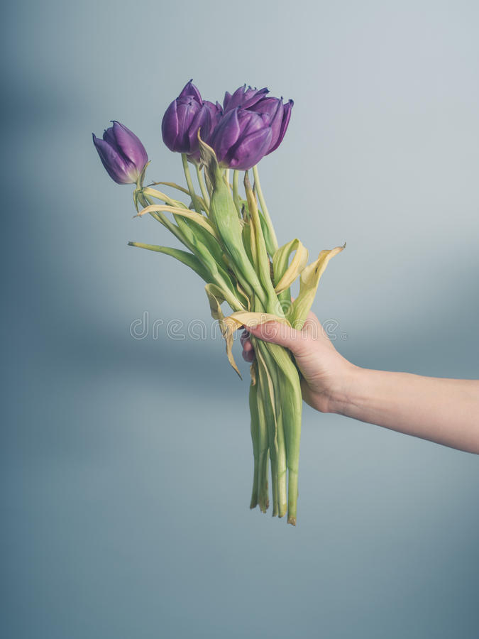Hand with dead flowers. A female hand is holding a bouquet of dead flowers royalty free stock images