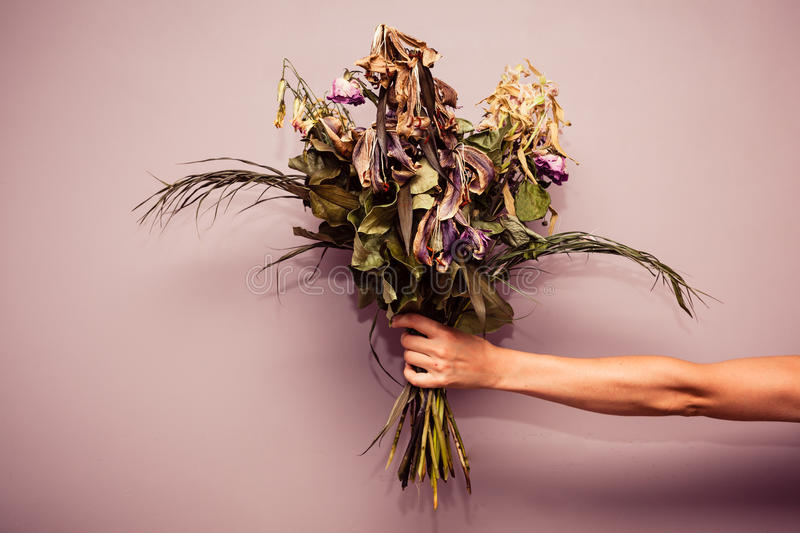 Hand with dead flowers royalty free stock photo