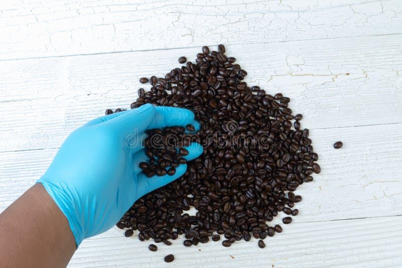 Hand in den blauen Handschuhholdingbraten-Kaffeebohnen stockfoto