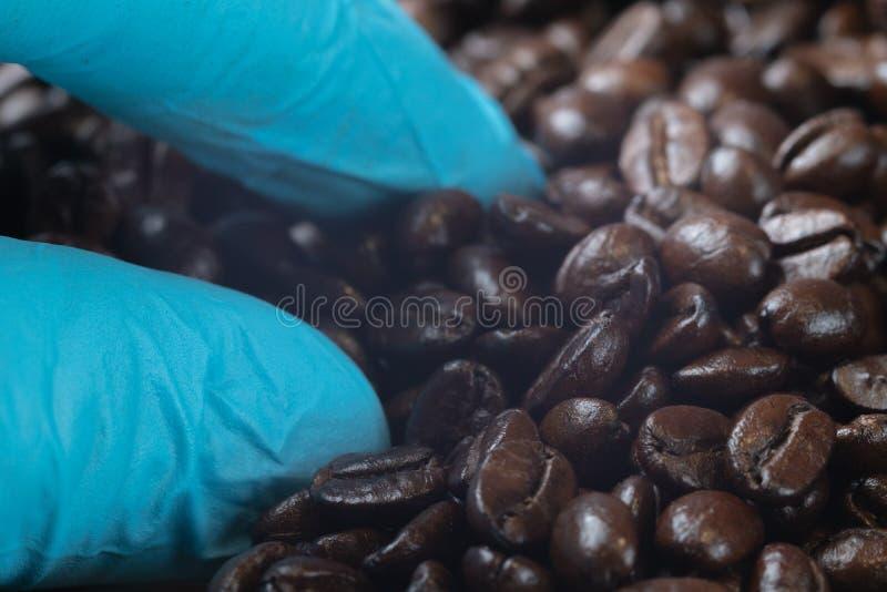 Hand in den blauen Handschuhholdingbraten-Kaffeebohnen lizenzfreies stockfoto