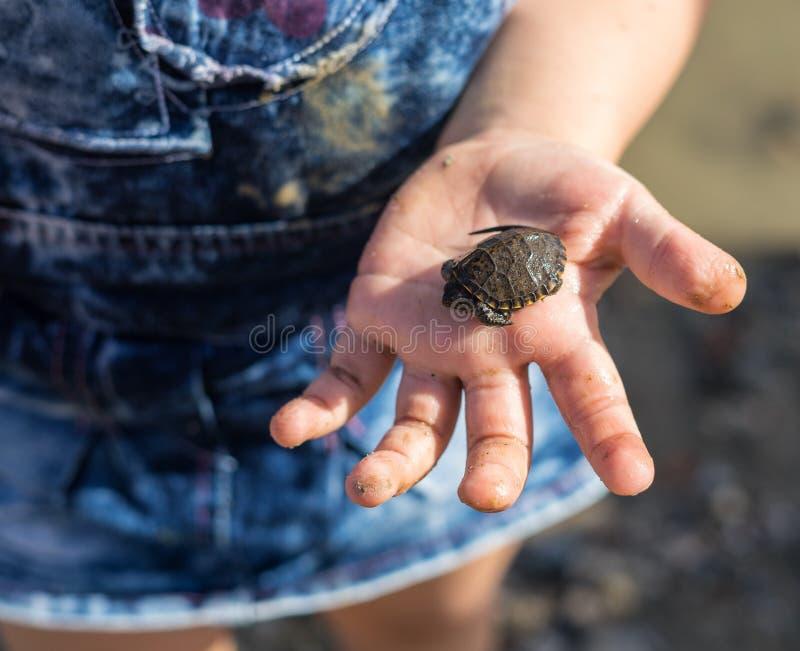 Hand des Mädchens nette neugeborene Babyschildkröte halten stockfoto