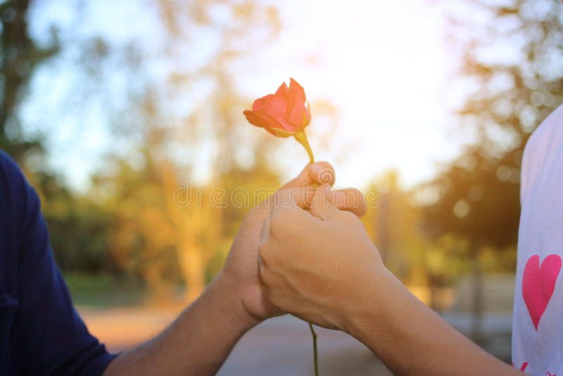 Hand des Mannes gibt der Frau auf Natur unscharfem Hintergrund mit Sonnenscheineffekt eine rote Rose Romantische Liebhaberdatieru stockfotografie