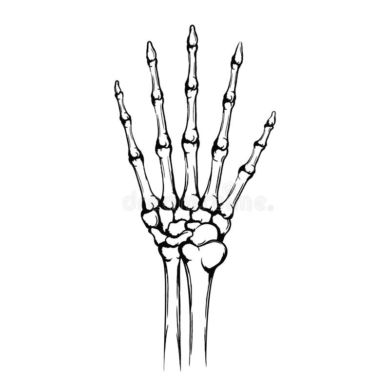 Niedlich Hand Anatomie Gelenke Zeitgenössisch - Anatomie Ideen ...