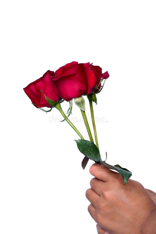 Hand die bloemen houdt stock foto's