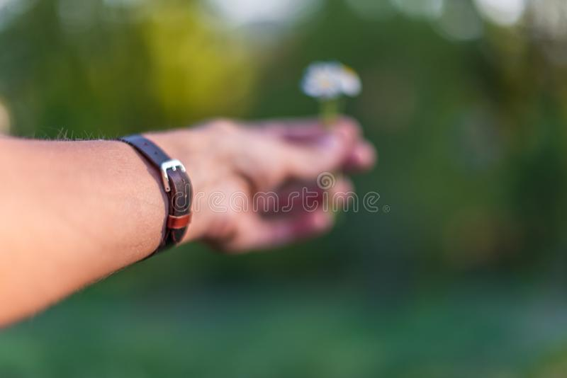 Hand, die das braune Lederarmband gibt ein Gänseblümchen trägt lizenzfreie stockfotografie