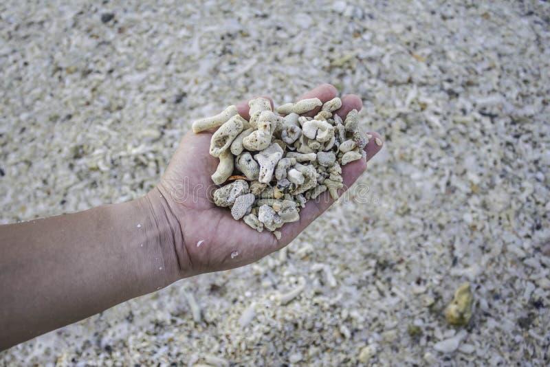 Hand die dood koraalfragment houden stock foto