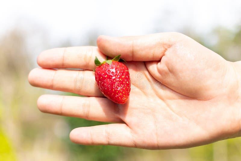 Hand die een aardbei houdt stock afbeelding