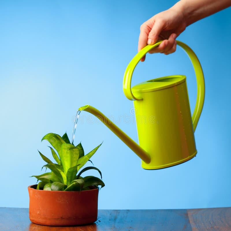 Hand die een installatie water geeft stock afbeelding