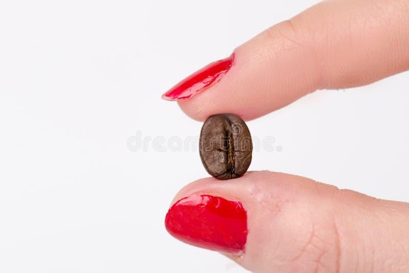 Hand die een koffieboon tussen vingers houden Koffiebonen en hand op een witte achtergrond Geïsoleerde stock fotografie