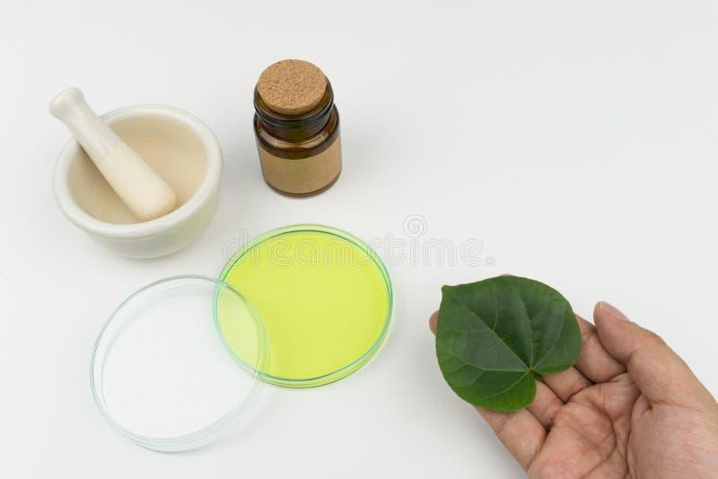 Hand die een organisch groen blad houden stock foto