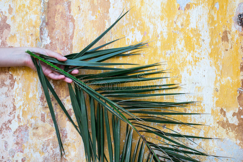 Hand die een palmtak voor oude oude muur houden als Palm royalty-vrije stock foto
