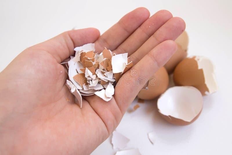 Hand, die Eierschale hält lizenzfreies stockfoto