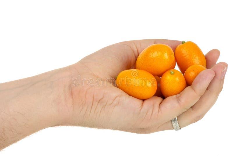 Hand, die etwas Orangefrüchte anhält stockbild