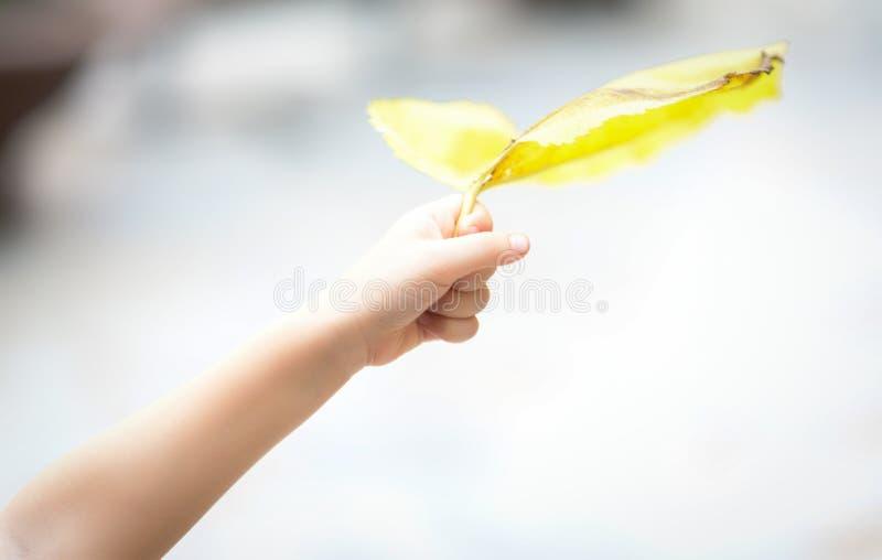 Hand die geel blad houden royalty-vrije stock foto