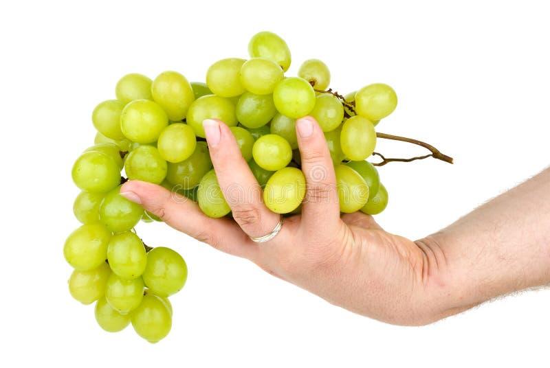 Hand, die grüne Trauben anhält. Getrennt lizenzfreie stockfotografie