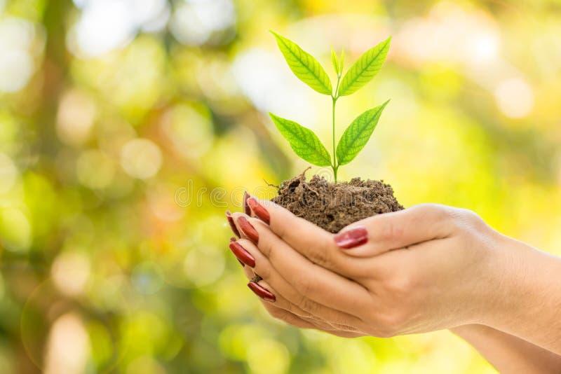 Hand die groene installatie het groeien op grond over aard, ecologieachtergrond houden stock fotografie