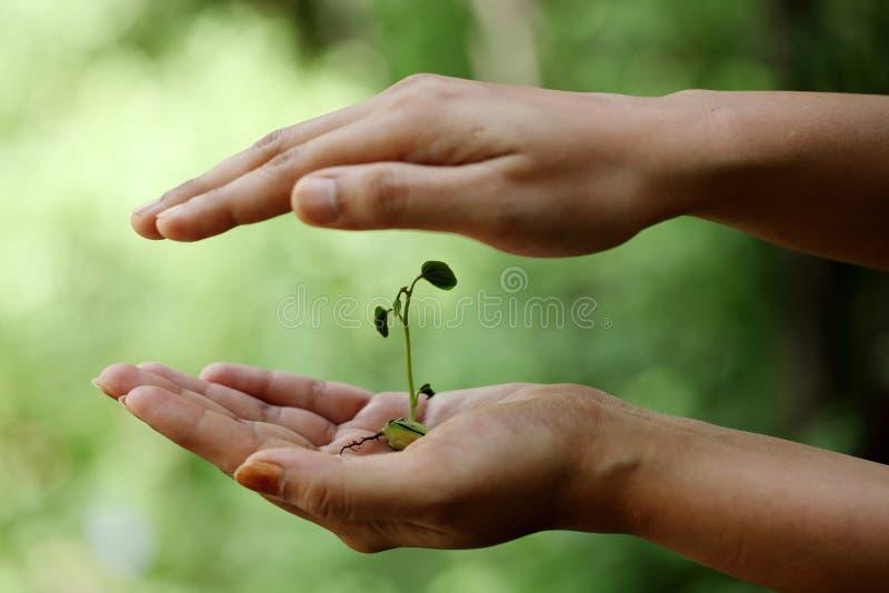 Hand, die kleine Anlage anhält stockbilder