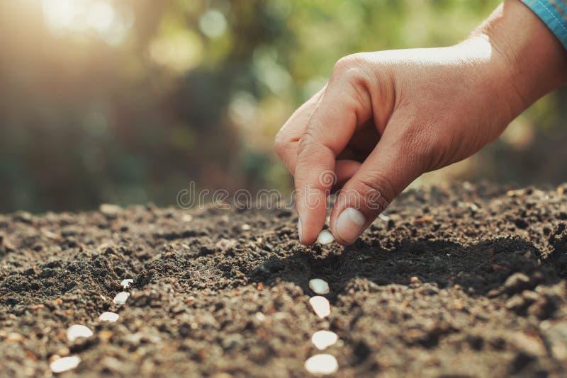 hand die pompoenzaad in de warme moestuin en het licht planten Landbouw royalty-vrije stock foto's