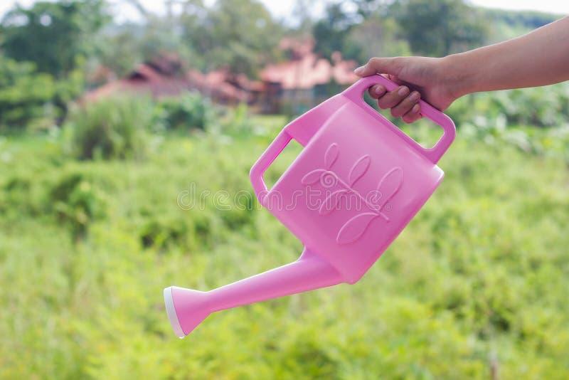 Hand die roze gieter houden Als een gietend water op groen Na stock foto's