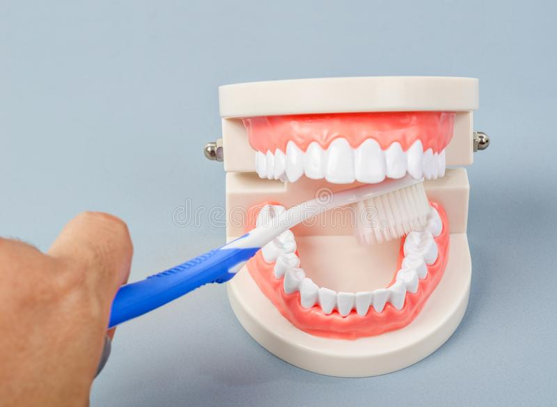 Hand, die unterrichtenden Zahn medel Reinigung der Zahnbürste hält stockfotos