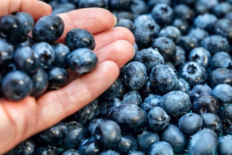 Hand die verse bosbessen, hoop van het houden naast, smakelijke blauwe bessen royalty-vrije stock afbeeldingen