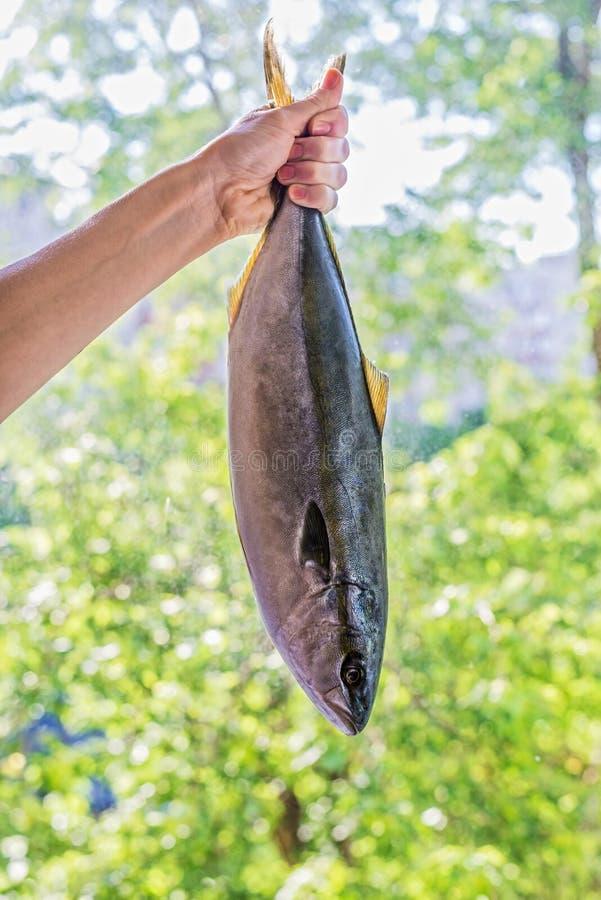 Hand die verse overzeese vissen, vangst houden royalty-vrije stock afbeeldingen