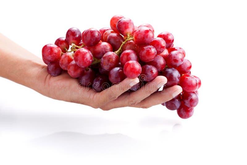 Hand die verse rode die bos van druiven houden op witte backgro worden geïsoleerd royalty-vrije stock afbeeldingen