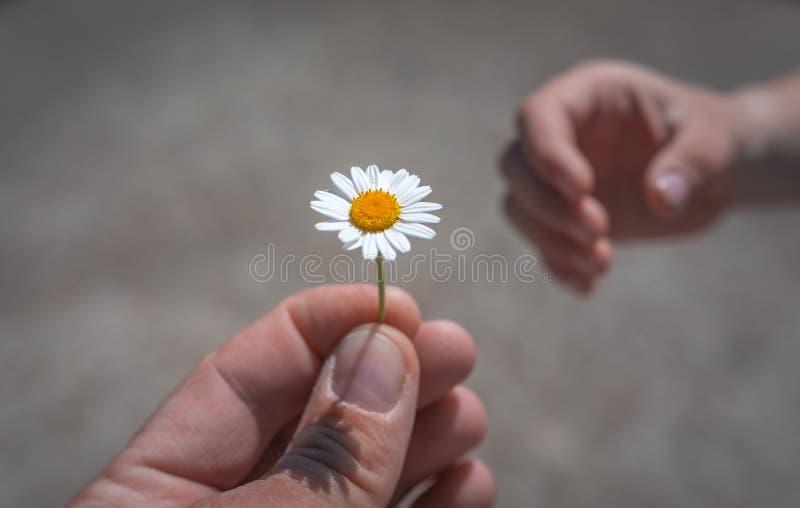 Hand die wilde bloem met liefde geven bij zonsondergang Mooie backgro royalty-vrije stock fotografie