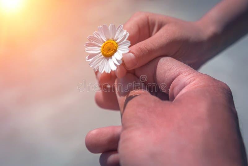 Hand die wilde bloem met liefde geven Mooie achtergrond stock afbeeldingen