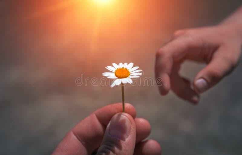 Hand die wilde bloem met liefde geven Mooie achtergrond royalty-vrije stock afbeeldingen