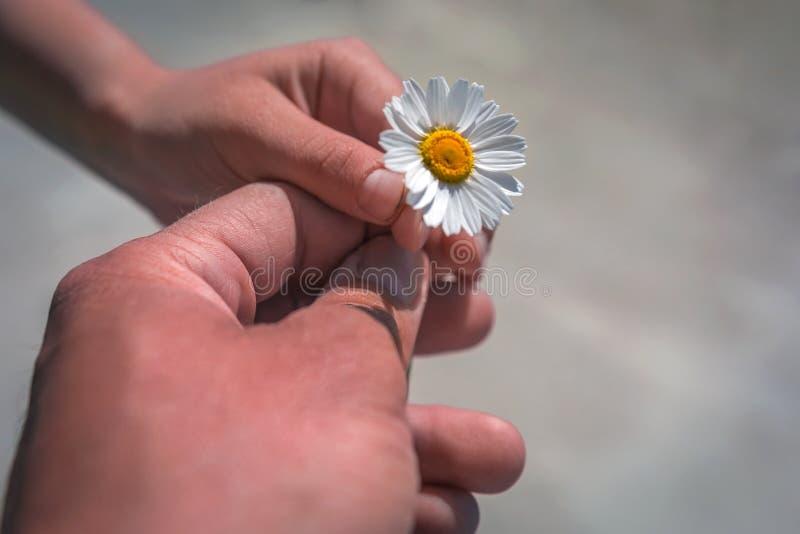 Hand die wilde bloem met liefde geven Mooie achtergrond stock fotografie