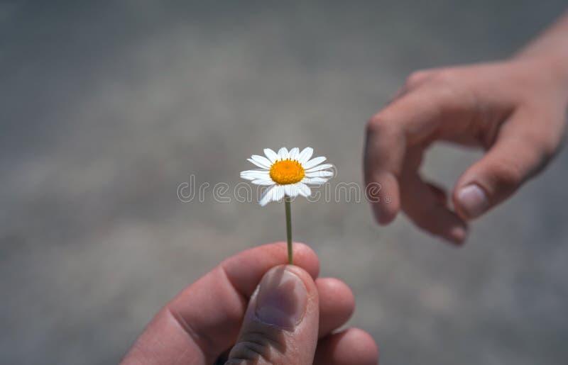 Hand die wilde bloem met liefde geven Mooie achtergrond stock foto