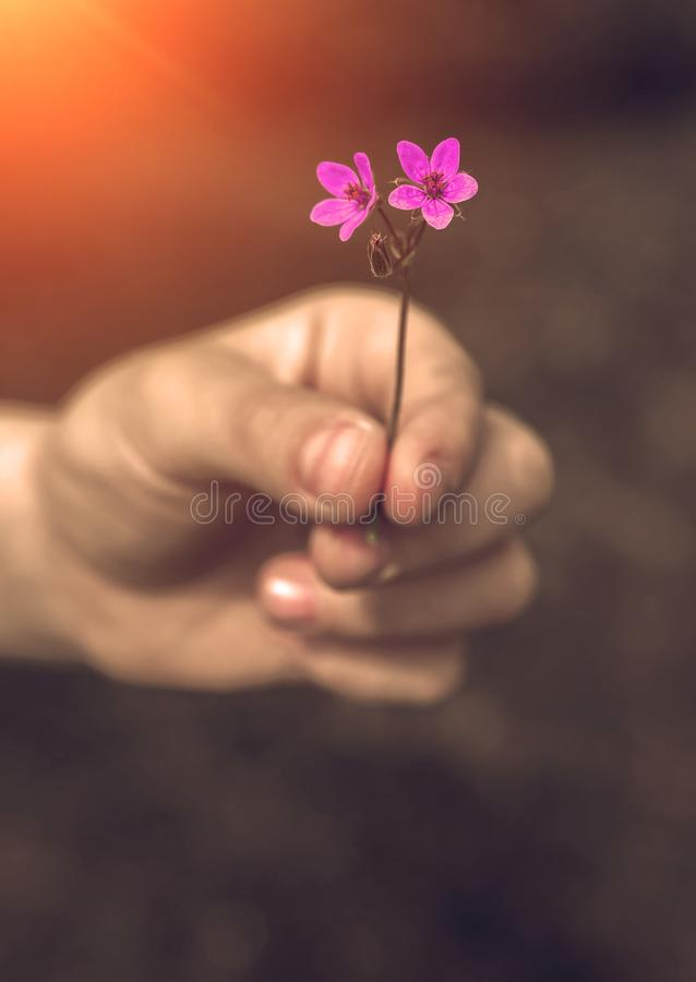 Hand die wilde bloem met liefde geven Mooie achtergrond royalty-vrije stock foto