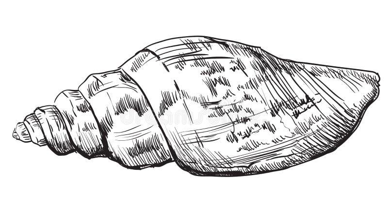 Hand die zeeschelp-3 trekken royalty-vrije illustratie