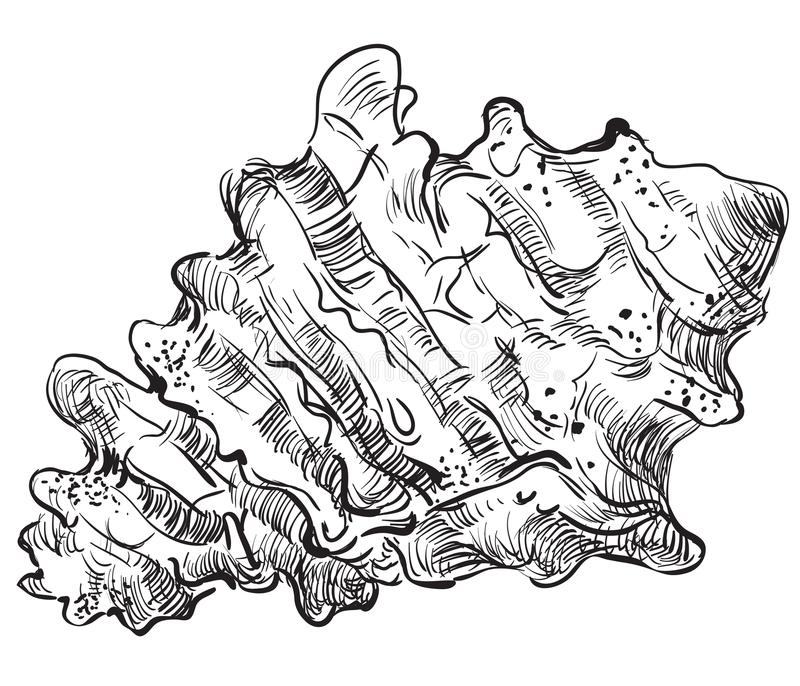Hand die zeeschelp-7 trekken royalty-vrije illustratie