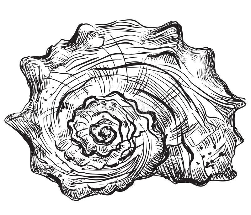 Hand die zeeschelp-8 trekken vector illustratie