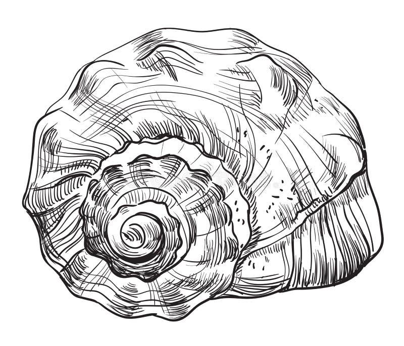 Hand die zeeschelp-12 trekken vector illustratie