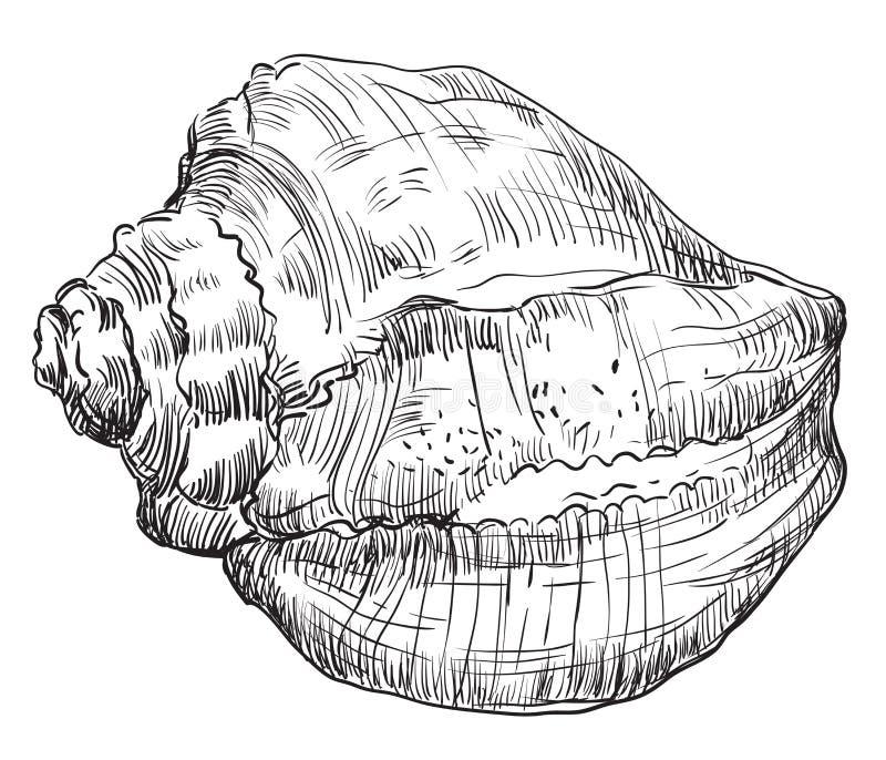 Hand die zeeschelp-14 trekken stock illustratie