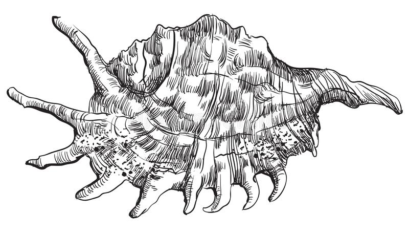 Hand die zeeschelp-30 trekken royalty-vrije illustratie