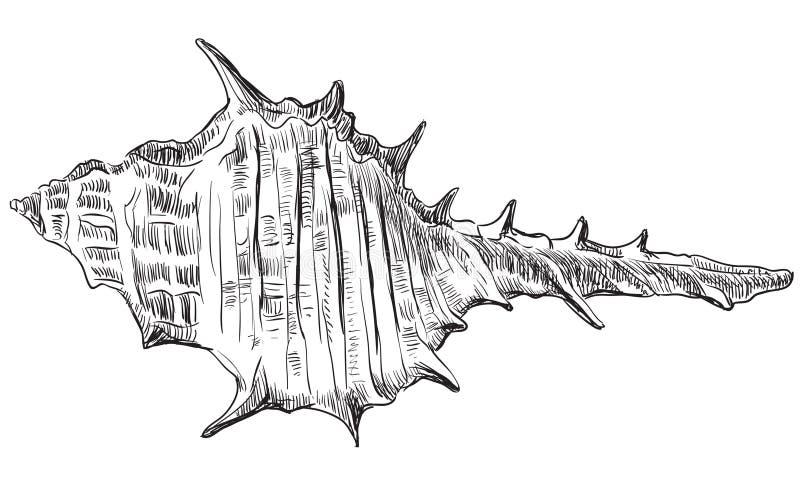 Hand die zeeschelp-23 trekken royalty-vrije illustratie