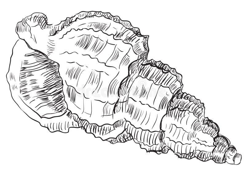 Hand die zeeschelp-24 trekken vector illustratie