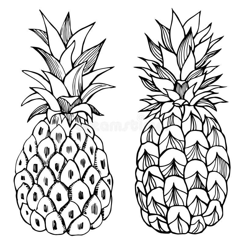 Hand dragen ananas Vektorn skissar illustrationen vektor illustrationer